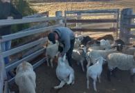 Boerderijwerk in Australie